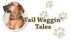 PC's Corner - Tail Waggin' Tales