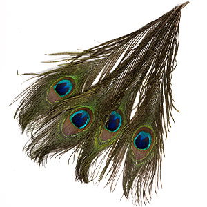 Feather, peacock (natural), 12-14 inches with natural eye. Sold per pkg 4.