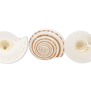 bead, sundial shell (natural), 22x21x11mm-29x25x10mm round, mohs hardness 3-1/2. sold per 16-inch strand.