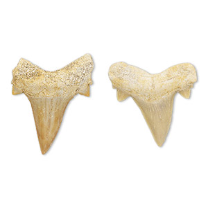 fossil, mako shark teeth (natural), 20x19mm-31x25mm undrilled shark tooth. sold per pkg of 2.