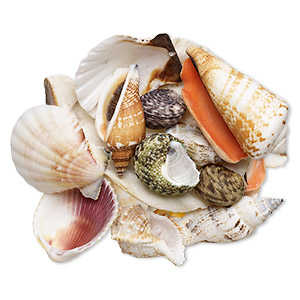 genuine seashell assortment, small, medium and large. (natural) pkg of 12.